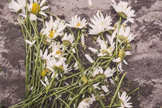 smashed daisies