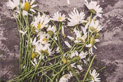 smashed daisies
