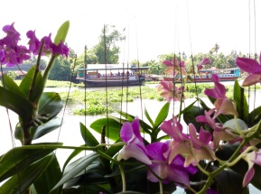 Orchids and Boats