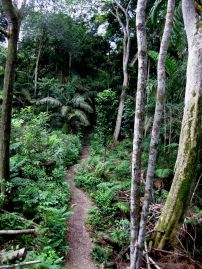Panama Jungle Trail
