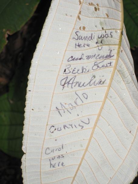 names on back of living leaf