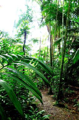 Jungle Trail3