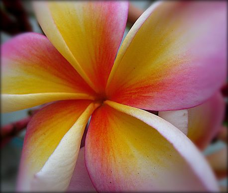 tropical beauty refined