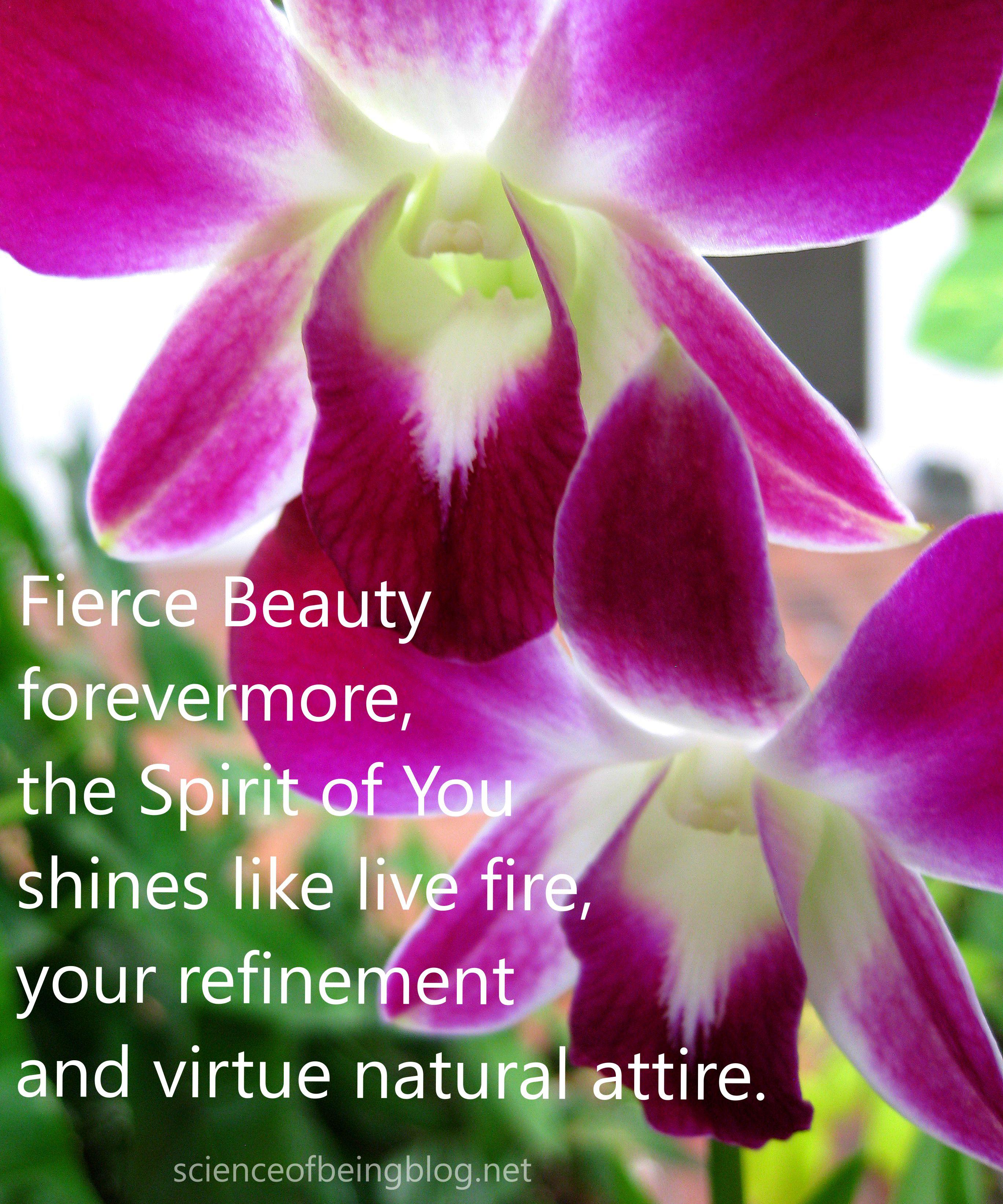 orchid purple twins fierce beauty
