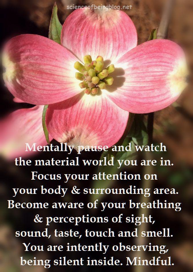pink dogwood mindful