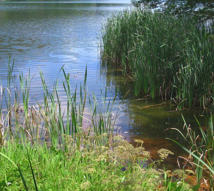 queen ann's lace lake